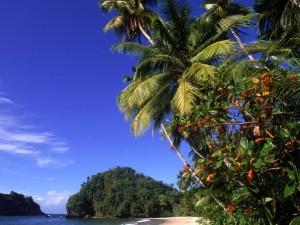 Beach in Trinidad